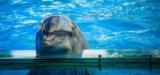 Дельфинарий на Пхукете: отзывы, цены, направления