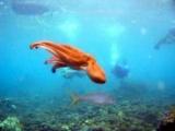 Остров Аруба: где находится, описание, отзывы туристов