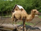 Зоопарк в Большеречье: от школы google зоопарк